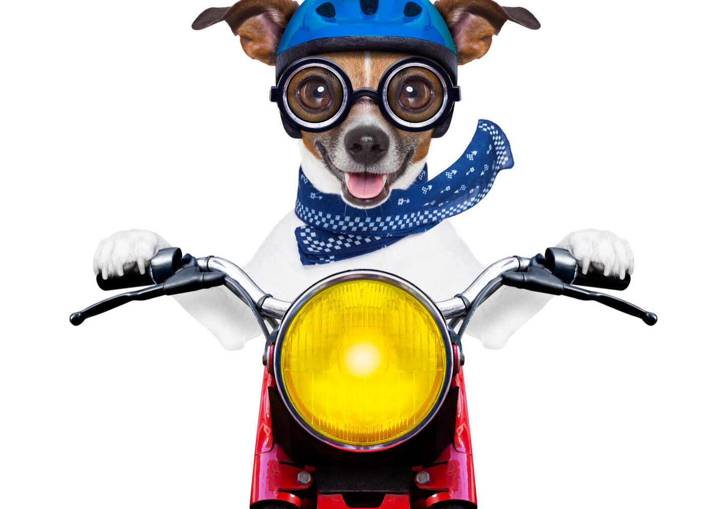 motorbike dog at speed with helmet and crazy glasses